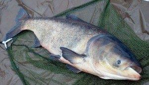Рыбные блюда теперь будут подведены под статью 226.1 УК